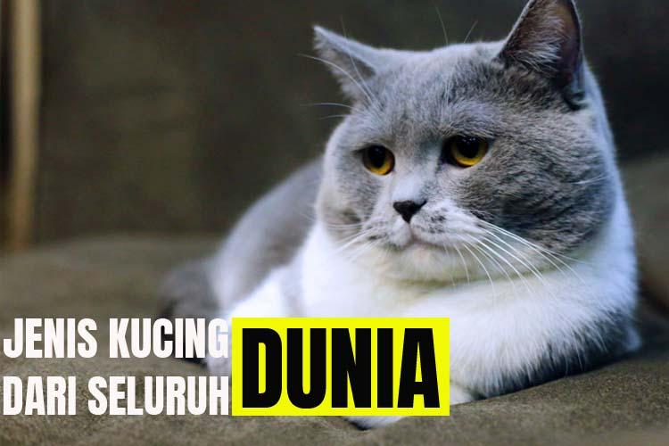 53 Jenis Kucing Di Dunia Wajib Kamu Tahu