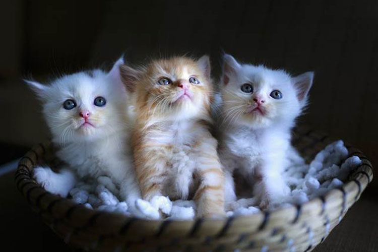 Cara merawat kucing tanpa induk