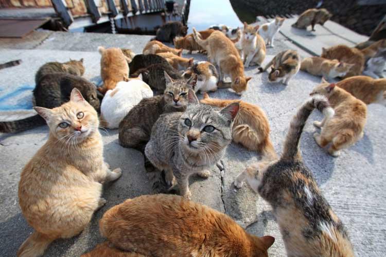 cara mengusir kucing liar di rumah