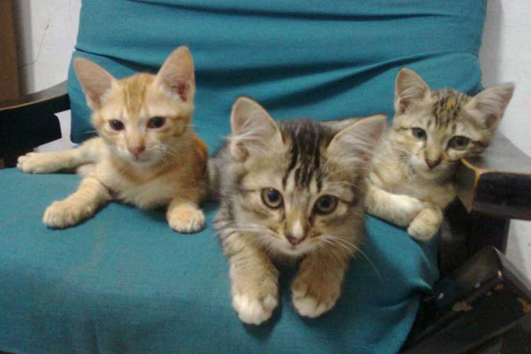 17 Cara Merawat Kucing Kampung Agar Bagus Sehat