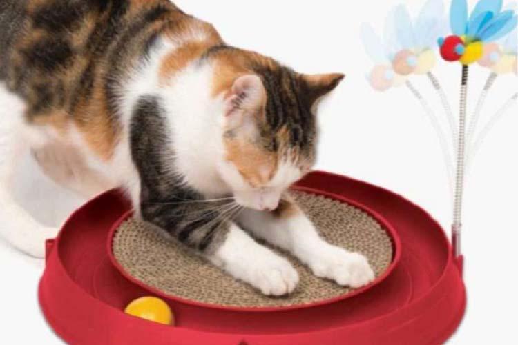 memberikan mainan kucing