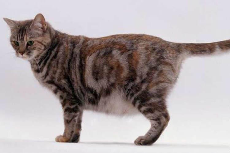 18 Cara Mudah Merawat Kucing Hamil