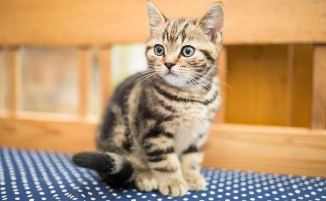 10 Fakta Kucing Kampung Bisa Buat Kamu Jatuh Cinta
