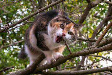 Asal Usul Kucing Kampung