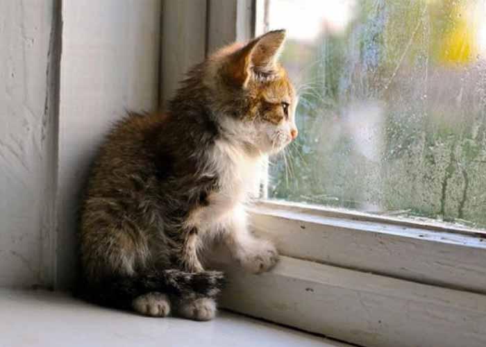 14 Cara Merawat Kucing Musim Hujan Terpercaya!