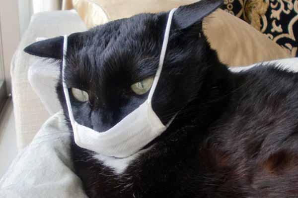 Penyakit Pernapasan Pada Kucing