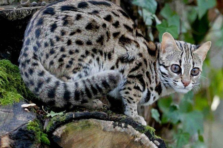 14 Cara Merawat Kucing Hutan Untuk Pemula Agar Jinak