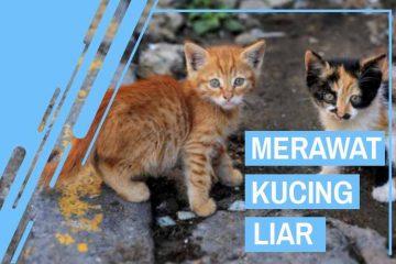 Cara Merawat Kucing Liar