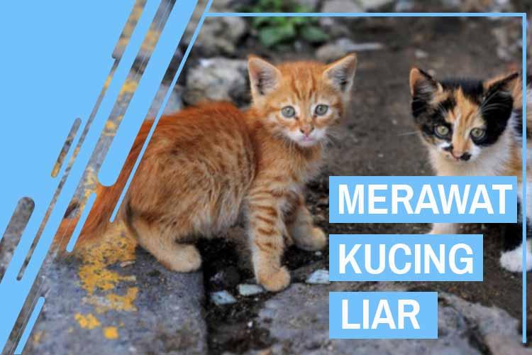 12 Cara Merawat Kucing Liar Agar Nurut