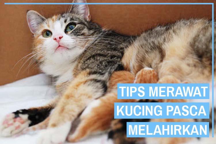 11 Cara Merawat Kucing Setelah Melahirkan Yang Tepat