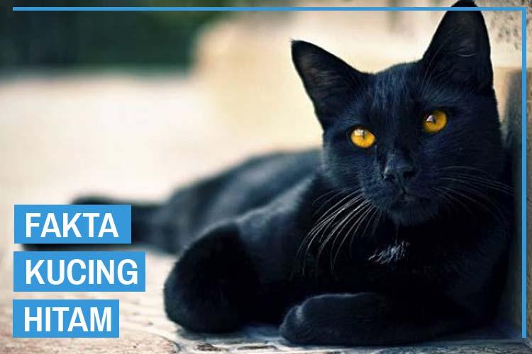 9 Fakta Kucing Hitam Bikin Kamu Tercengang