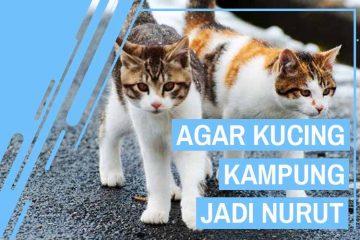 Cara merawat kucing kampung jadi nurut