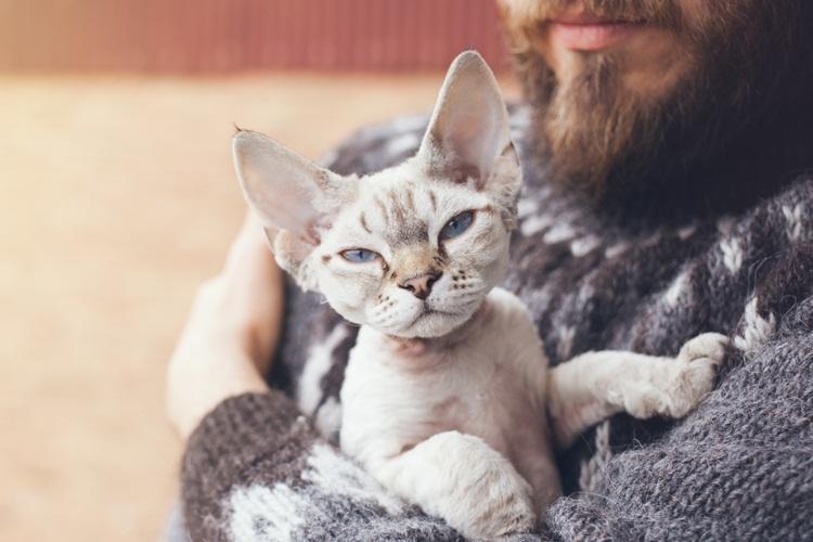 9 Cara Menjinakkan Kucing Liar Agar Nurut Denganmu