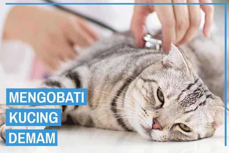 9 Cara Mengobati Kucing Demam Secara Efektif