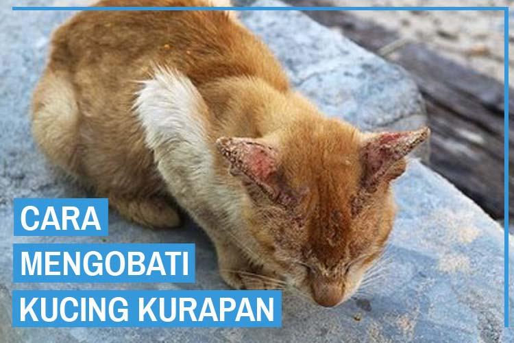 6 Cara Ampuh Mengobati Kucing Kurapan