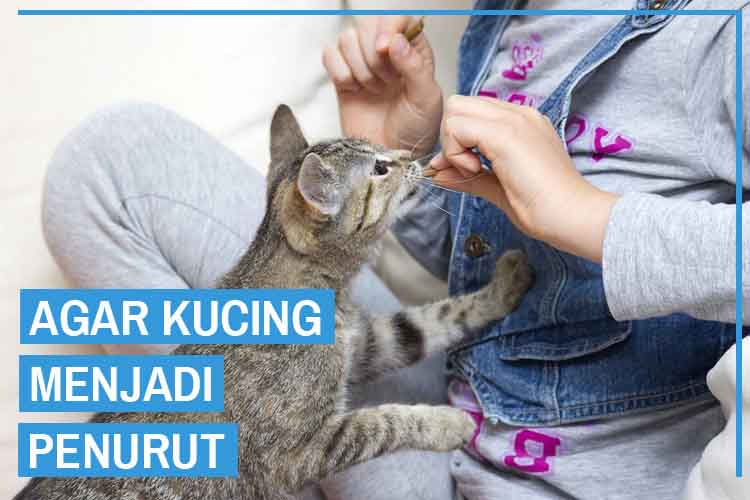 12 Cara Merawat Kucing Agar Nurut Pada Pemiliknya
