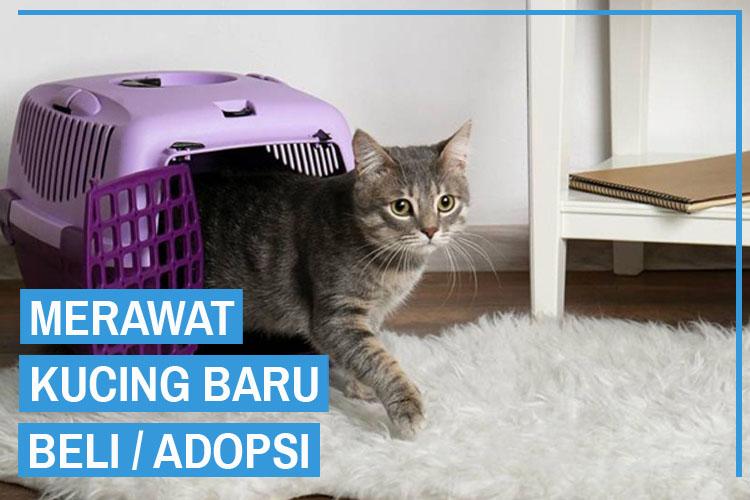 6 Cara Merawat Kucing Baru Diadopsi atau Beli