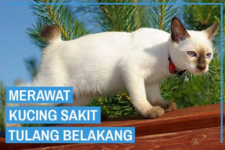 11 Cara Merawat Kucing Sakit Tulang Belakang