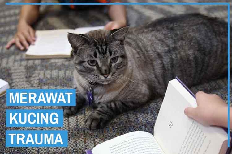 11 Cara Merawat Kucing Trauma Agar kembali Normal