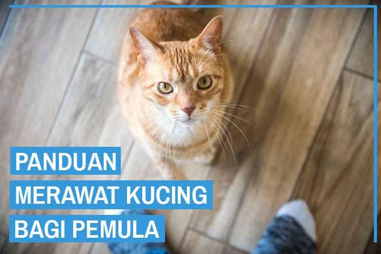 13 Cara Merawat Kucing Untuk Pemula Dengan Mudah