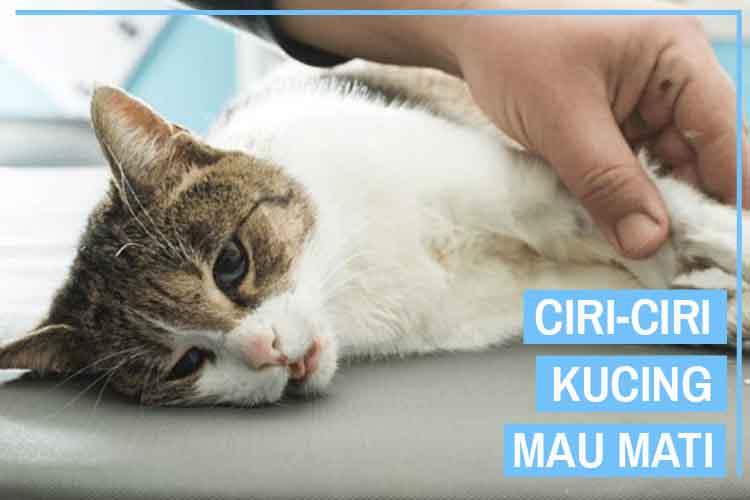 14 Ciri Ciri Kucing Mau Mati yang Harus Kamu Waspadai