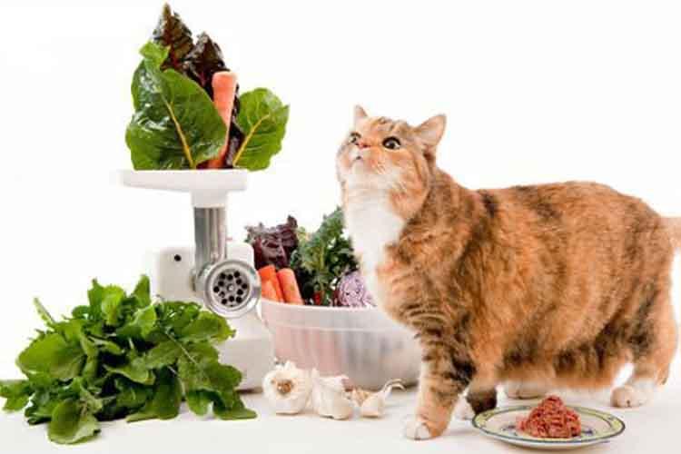 Nutrisi untuk kucing