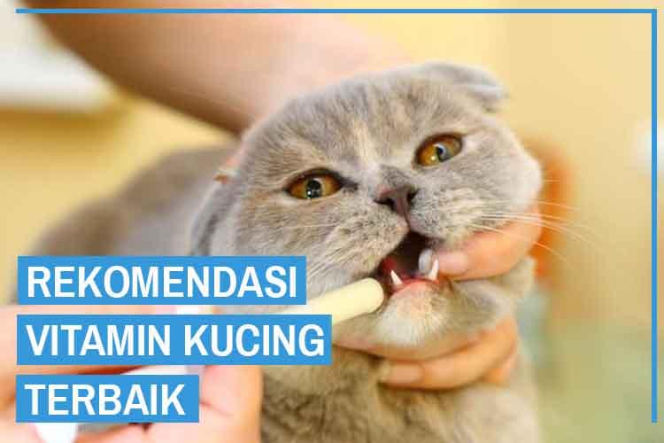 9 Rekomendasi Vitamin Kucing Terbaik dan Terpercaya