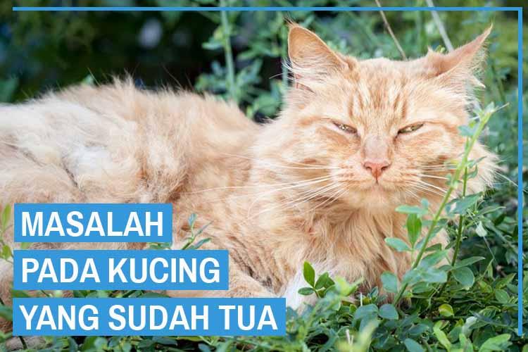 5 Masalah Pada Kucing Tua dan Cara Mengatasinya
