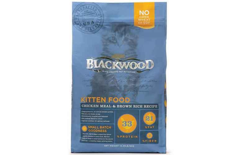 Blackwood Kitten