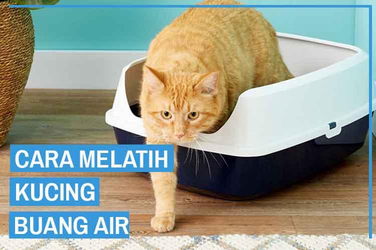 7 Cara Melatih Kucing Buang Air Agar Tidak Sembarangan