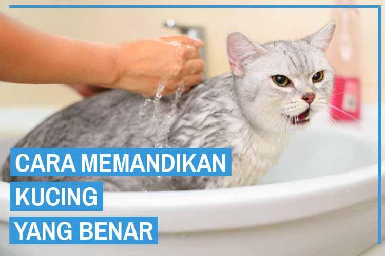 Cara Memandikan Kucing dan Tips dari Para Ahli