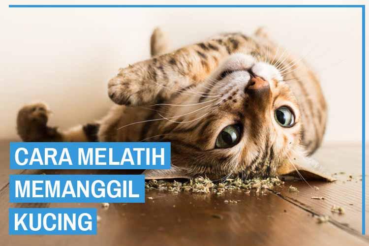5 Cara Memanggil Kucing Agar Datang dan Nurut