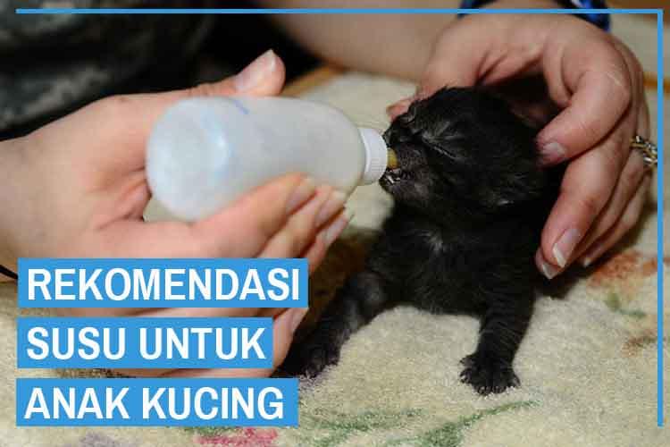 10 Rekomendasi Susu untuk Anak Kucing Yang Sehat
