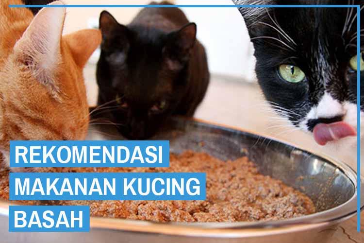 rekomendasi makanan kucing basah