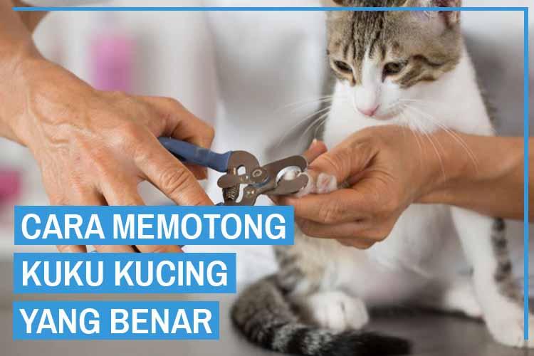Wajib Tahu! Tips Dan Cara Memotong Kuku Kucing
