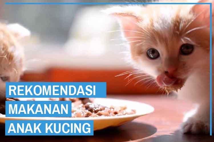 8 Rekomendasi Makanan Untuk Anak Kucing Kecil