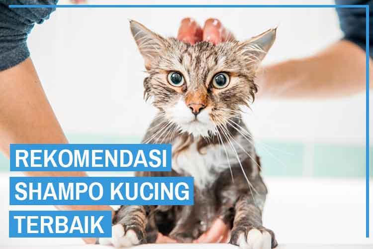 11 Rekomendasi Shampo Kucing Bagus Kualitas Terbaik