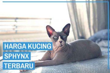 Harga kucing Sphynx