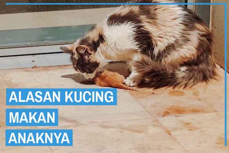 7 Alasan Kucing Makan Anaknya yang Harus Kamu Tahu