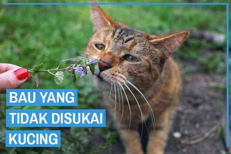 Harus Tahu! Inilah 7 Bau yang Tidak Disukai Kucing