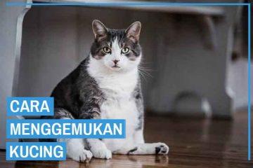 Cara agar kucing gemuk