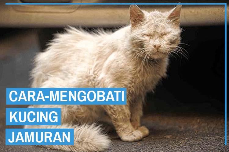 8 Cara Mengobati Kucing Jamuran Terbukti!