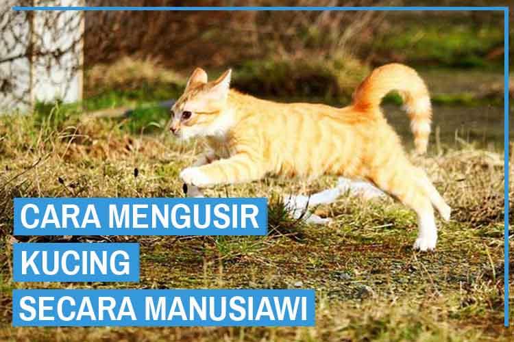 Cara Mengusir Kucing Tanpa Harus Menyakitinya