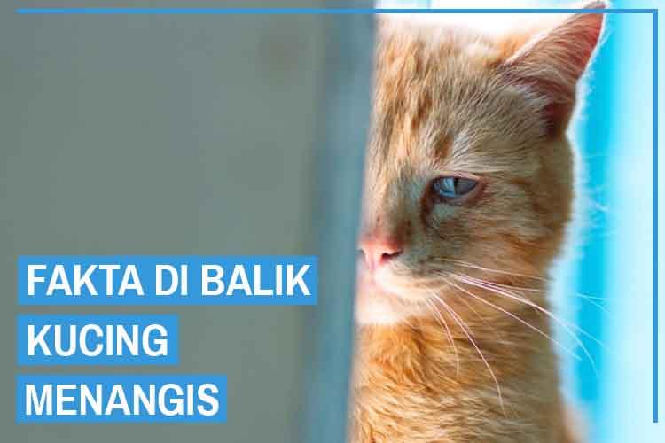 7 Fakta Kucing Menangis, Ternyata Dia Gak Sedih Lo