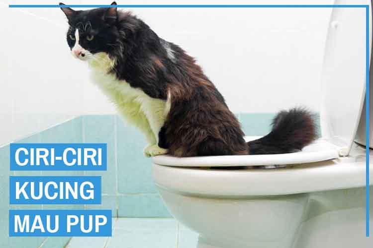 Perhatikan! Inilah 5 Ciri Ciri Kucing Mau Pup