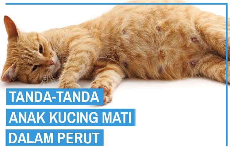 tanda tanda anak kucing mati dalam perut