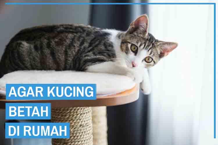 16 Cara Agar Kucing Betah Di Rumah