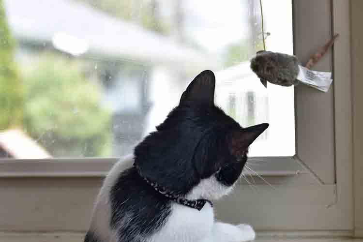 Batting Practice Cat Toy