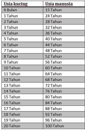 Tabel umur kucing dan umur manusia
