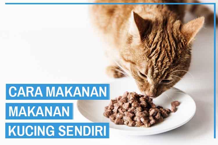 Cara Membuat Makanan Kucing yang Murah dan Sehat